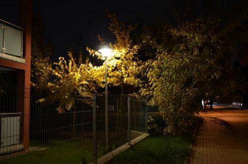 Drzewo przerosło lampę