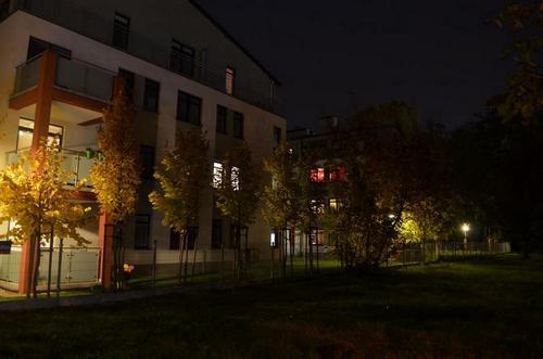 Drzewa w fazie wzrostu służą tylko mieszkańcom pierwszego piętra
